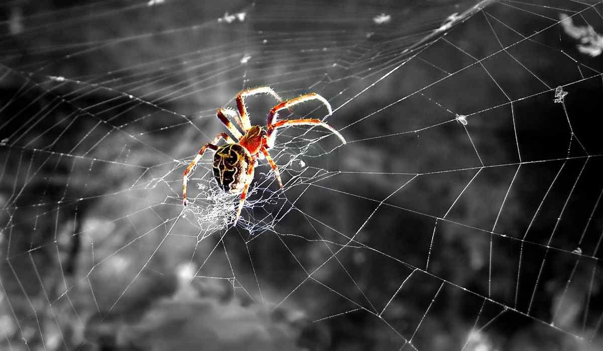 Quando un ragno appare spesso nella tua vita.