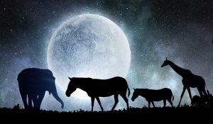 Ecco il Significato di Sognare uno di Questi Animali